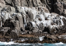 Seals sitting on the rocks, east coast Tasmania © Danielle Ryan, Bluebottle Films