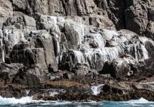 Seals sitting on the rocks, east coast Tasmania ©Danielle Ryan, Bluebottle Films