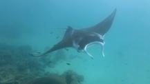 Manta Ray - Ningaloo Reef © James Sherwood - Bluebottle Films Oct 2014