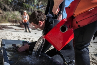 pouring seawater into the trough while Macquarie Uni researcher Nathan Bass tag's port jackson shark - Jervis Bay Sept:Aug 2014©Danielle Ryan