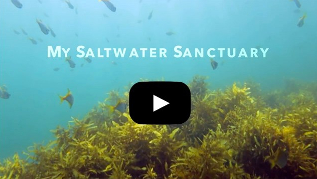 My Saltwater Sanctuary Web Link 2