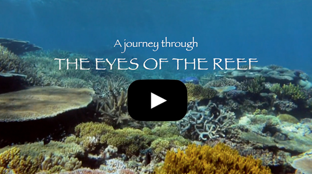 A journey through the eyes of the reef - web link